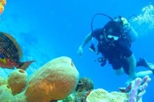 Diving Siesta Key PADI
