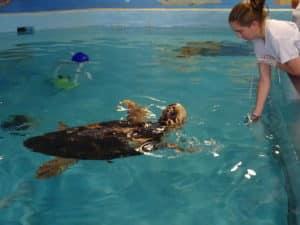 Mote Marine Turtle