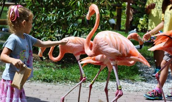 ... A Beautiful Botanical Garden And Bird And Animal Sanctuary That Has  Emerged As One Of The Oldest Continuously Operating Tourist Attractions In  Florida.